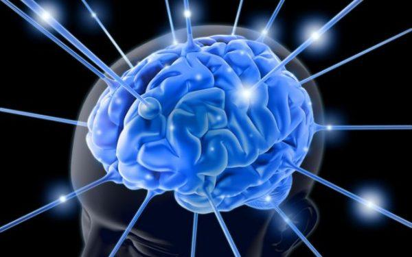 creier2