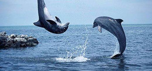 delfini-gennaio