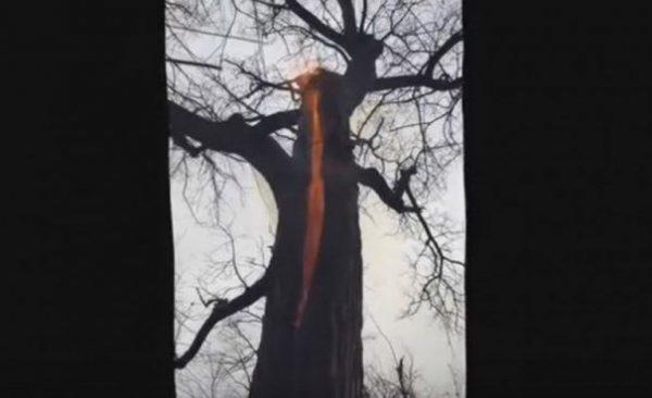 copacul-diavol-465x390