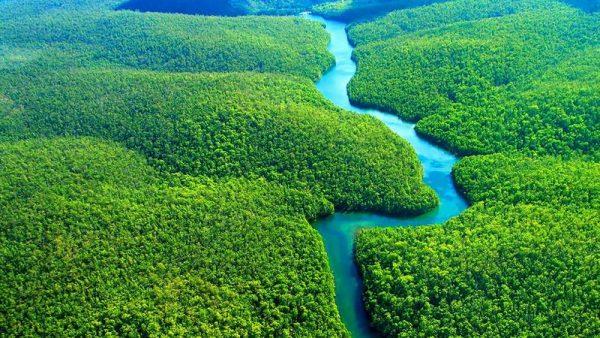 padurea amazoniana