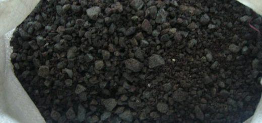 sare-neagra